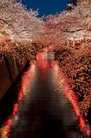目黒川の桜並木の夜景