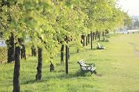 山梨県 若葉の並木と公園のベンチ