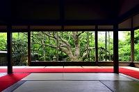 京都府 宝泉院
