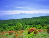 山梨県 美し森から望む初夏のつつじと南アルプス連峰