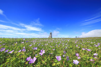 長野県 上田市 ハクサンフウロ咲く美しの塔