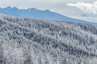 長野県 霧氷の林と八ヶ岳