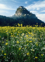 オーストリア ホッホオスータービッツ城と花畑