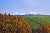 北海道 大雪山とカラマツ