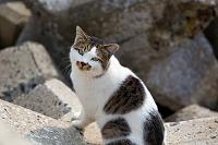 テトラポッドの上のキジ白猫