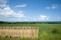 鹿児島県 種子島 稲を干す