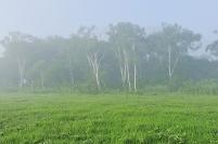 群馬県 尾瀬 中田代から望む白樺と朝霧