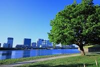 東京都 お台場 緑樹とビル群 朝