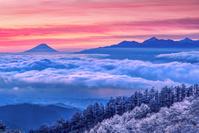 長野県 富士山と雲海と霧氷