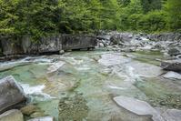 長野県 新緑の赤沢渓谷