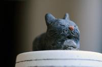 うずくまる黒猫