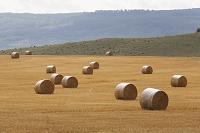 ドイツ ザクセン・アンハルト州 麦畑と麦ロール