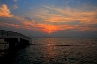 千葉県 木更津市 海上に並ぶ電柱