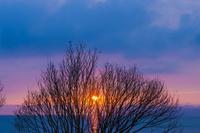 琵琶湖畔の朝日と木