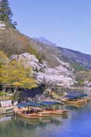 京都府 桜の咲く嵐山