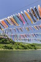 神奈川県 泳げ鯉のぼり相模川