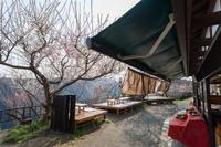 奈良県 奈良市 月ヶ瀬 梅渓