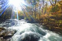 青森県 奥入瀬渓流 三乱の流れと紅葉と午後の木漏れ日