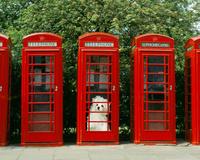 イギリスの公衆電話にいるマルチーズ