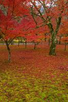 京都府 南禅寺の紅葉