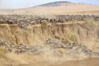 ケニア ヌーの大移動