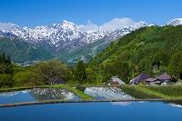 長野県 青鬼の水田と北アルプス