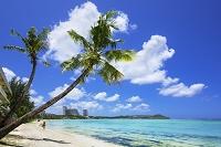 グアム島 タモンビーチとヤシの木