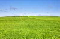 青空と麦畑