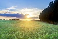 熊本県 阿蘇市 そば畑の夕日