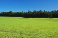 北海道 根釧台地の牧草地