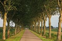オランダ ベームステル干拓地