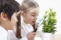 虫眼鏡で植物を観察する子供たち