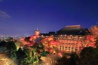 京都府 紅葉の清水寺 ライトアップ
