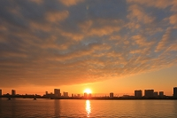 東京都 豊洲新市場建設地