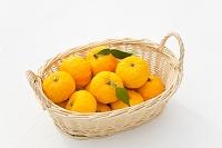 果物 柚子