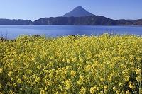 鹿児島県 指宿市 池田湖湖畔から開聞岳