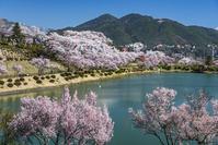 長野県 荒神山公園の桜