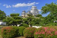 兵庫県 サツキ咲く姫路城