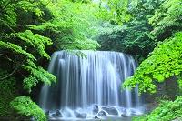 福島県 猪苗代町 小雨の達沢不動滝