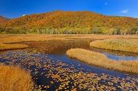 群馬県 片品村 尾瀬ヶ原の草もみじと池塘