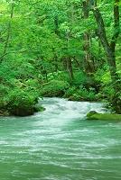 青森県 新緑の奥入瀬渓流