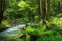 長野県 上高地 岳沢湿原上流