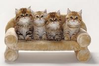 ソファーに仲良く座る4匹の子猫