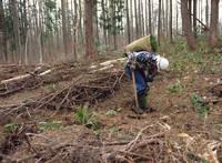 ヒノキの植林