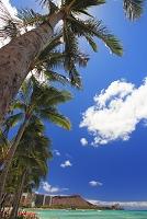 ワイキキビーチ ヤシの木 ダイヤモンドヘッド