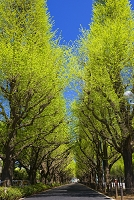 東京都 神宮外苑