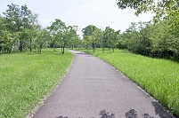 大阪府 和泉市 公園の緑の樹木