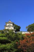 兵庫県 明石城の坤櫓と紅葉