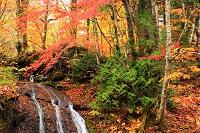 群馬県 みなかみ町 照葉峡・支流の滝と紅葉