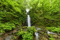 青森県 奥入瀬渓流 雲井の滝